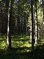 Skuleskogen National Park forest.jpg