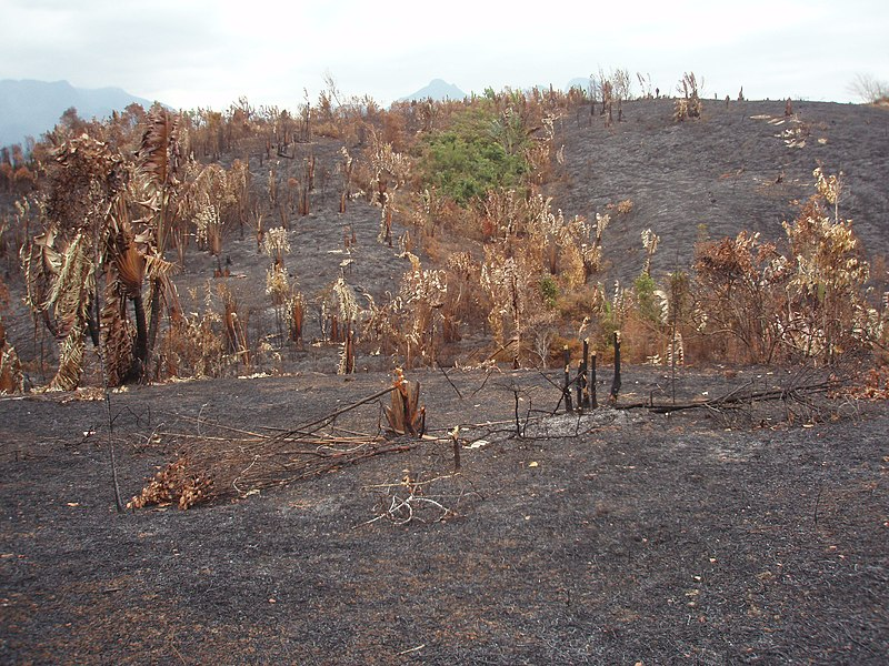File:Slash and burn Ambalapaiso.JPG