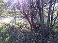Slatiny - panoramio (5).jpg