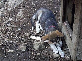 Sled Dog Discovery & Musher's Camp 43.jpg