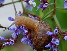����� � ����� ����� ������� 225px-Snail1web.jpg