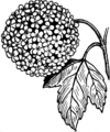 Snowball (PSF).png