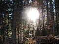 Sommerlicher Herbst Herrenstuhl - panoramio.jpg