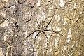 Spider7796.jpg