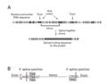 Split Gene Theory figure 4.png