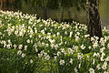 Spring in London (7116619083).jpg