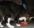 Sprout attacking the pumpkin.jpg