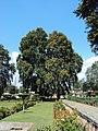 Srinagar - Shalimar Gardens 38.JPG