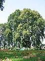 Srinagar - Shalimar Gardens 55.JPG