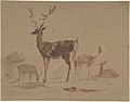 Stag and Its Young MET DP804689.jpg