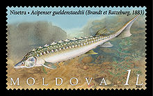 Stamp of Moldova 012.jpg