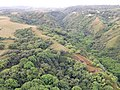 Starr-141014-2243-Caesalpinia decapetala-aerial view-Kakipi Gulch Haiku-Maui (24879629799).jpg