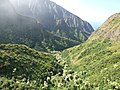 Starr-151005-0184-Aleurites moluccana-aerial view makai-West Maui-Maui (26009928010).jpg