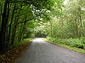 Straight on to Clumber Park - geograph.org.uk - 914450.jpg