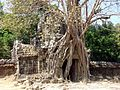 Strangler Fig Ta Som Angkor1032.jpg