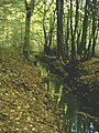 Stream in Bromley Green Woods - geograph.org.uk - 71966.jpg
