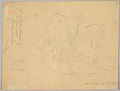 Study of a Willowherb; verso- Study of Two Cows MET DP827691.jpg