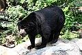 Sun Bear (Helarctos malayanus) in Dusit Zoo, Bangkok, Thailand.jpg
