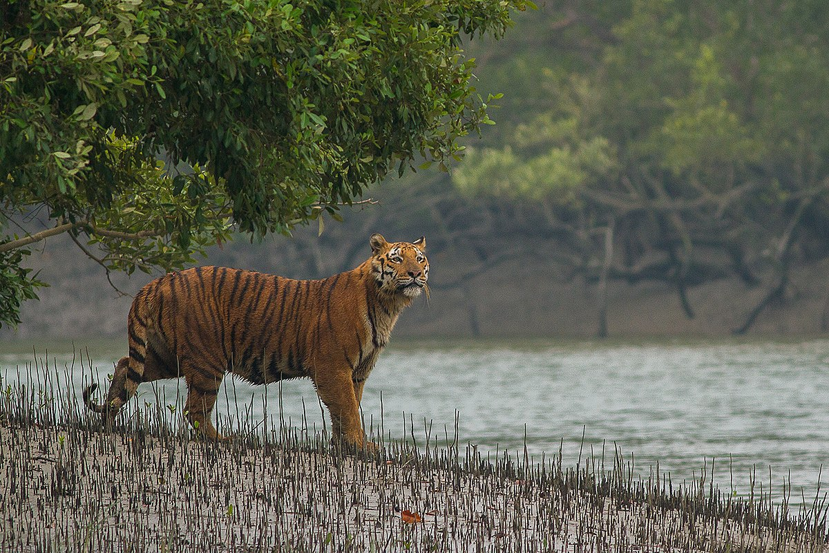 Sundarbans National Park - Wikipedia