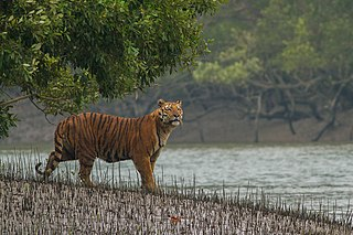 Sundarbans National Park A National Park, Tiger Reserve, and a Biosphere Reserve in West Bengal, India.