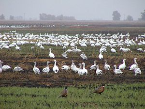 Sutter national wildlife refuge.jpg