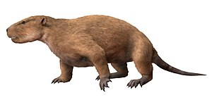 Multituberculata - Restoration of Taeniolabis, the largest multituberculate at approximately 100 kg.