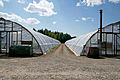 Taimi Tapio greenhouses.jpg