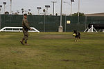Taking a bite out of crime, military working dogs sink teeth into training 141201-M-OB827-050.jpg
