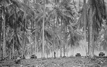 Black and white photo of three World War II-era tanks moving between tall palm trees. A man wearing military uniform is crouching in the foreground