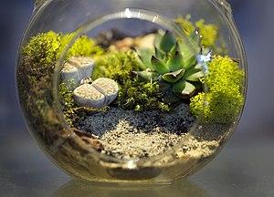Vivarium - A miniature home terrarium.
