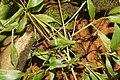 Tettigoniidae 3534.jpg