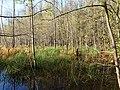 Teufelsbruch swamp next to crossing path in autumn 16.jpg