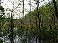 Teufelsbruch swamp next to crossing path in summer 16.jpg
