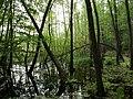 Teufelsbruch swamp next to crossing path in summer 19.jpg