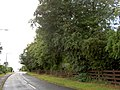 The 4 trees. - geograph.org.uk - 524237.jpg