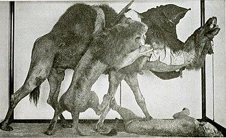 Jules Verreaux - Image: The American Museum journal (c 1900 (1918)) (18160964071)