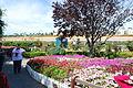 The Flower Fields at Carlsbad Ranch 17 2014-04-28.jpg