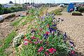 The Flower Fields at Carlsbad Ranch 27 2014-04-28.jpg