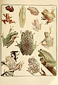 The Frog Book (1906) Color plate 10.jpg