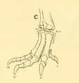 The Osteology of the Reptiles-209 dfg ghj dertg ftgy ty t.png