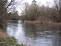 The Wiltshire Avon near Bodenham - geograph.org.uk - 331524.jpg