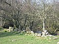 The banks of the River East Allen - geograph.org.uk - 737565.jpg