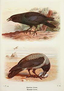 The birds of the British Isles and their eggs (8263761655).jpg