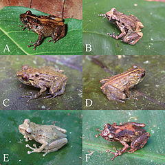 Six frogs from a paper available on PubMed