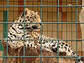 Tierpark 08 05 25a.jpg