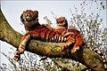 Tigers Southwark (6393992131).jpg