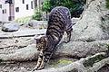 Today's Cat@2015-03-16 (16647833549).jpg