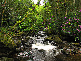 Lower section of Torc Waterfall Torc Waterfall at Killarney National Park2.jpg