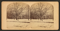 Touro Park in winter, by Joshua Appleby Williams.png