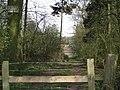 Tree belt north of Wroxall - geograph.org.uk - 1804034.jpg